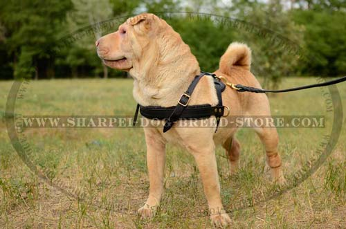 Durable Leather Tracking/Pulling Dog Harness for Shar Pei Breed