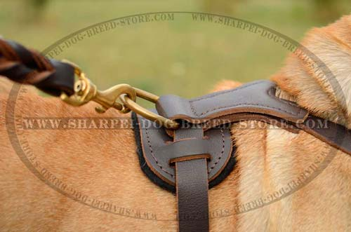 Leather Harness with Y-shaped Chest Plate and Studs for Shar Pei Breed Walking