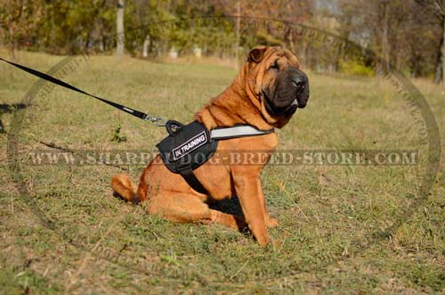 Durable Dog Harness for Work and Walking Your Shar Pei with Identification Patches