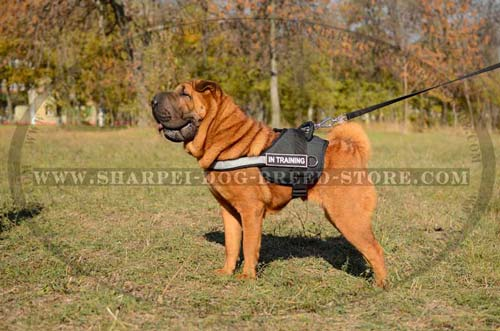 Durable Nylon Dog Harness for Shar Pei Breed with Reflective Trim and ID Patches