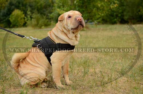 Nylon Shar Pei Dog Harness of Thought Out Design for Pulling, Trackinbg and Walking