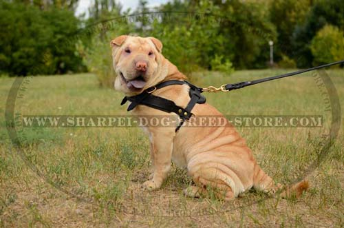 Light Weight Shar Pei Breed Harness Made of High Quality Leather