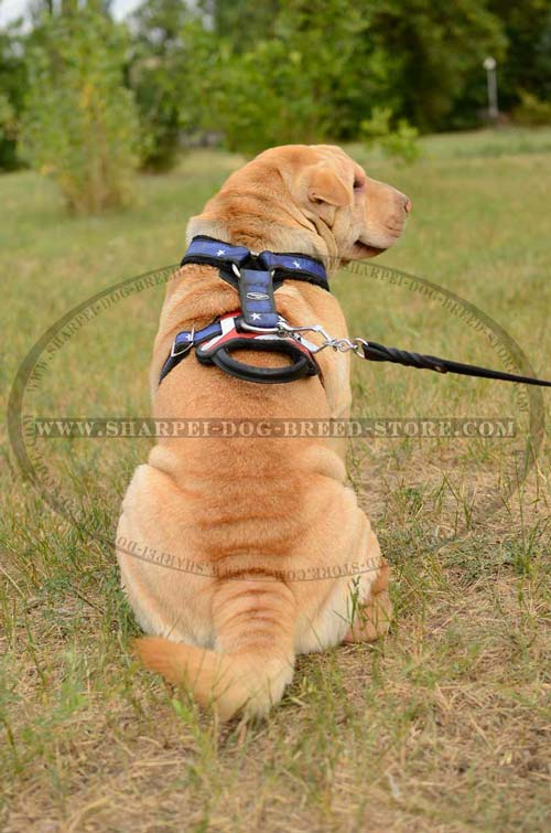Durable Shar pei Breed Harness for Attack/Protection Training or Walking