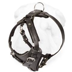 Shar Pei Breed Harness of Heavy Duty Quality Made of Genuine Leather