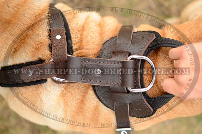 Heavy Duty Shar Pei Dog Harness of Enhanced Comfort and Durability