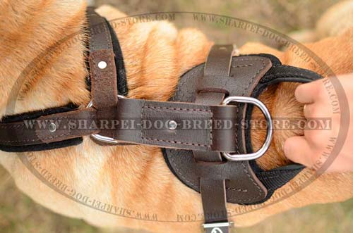 Exclusive Design Shar Pei Dog Harness for Comfortable Training