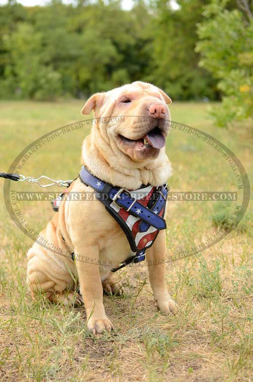 Strong Training Leather Dog Harness for Shar Pei Breed