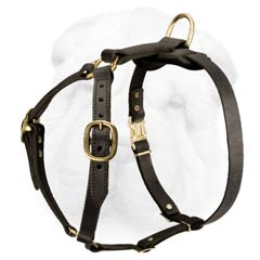 Tracking-Walking Shar Pei Breed Harness Made of Genuine Leather