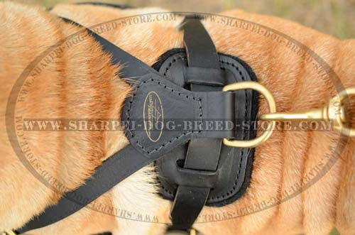 Leather Harnesses