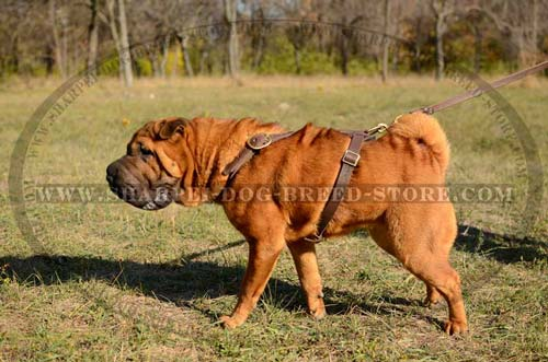 Strong Tracking Dog Harness for Shar Pei Breed