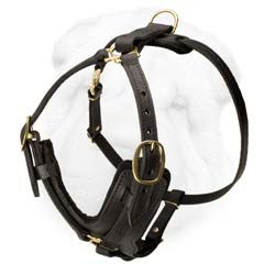 Shar Pei Dog Leather Harness with Y-Shaped Chest Plate and Refined Straps Design