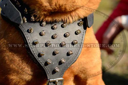 Durable Harness Made of Full Grain Leather for Shar pei Breed with Spikes