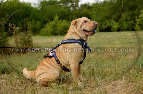 Durable Trainig Harness Made of Full Grain Leather for Shar Pei Breed