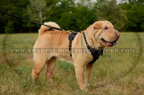 Quality Leather Dog Harness Great for Tracking Work and Everyday Use