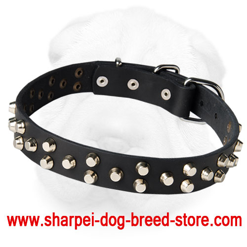 Leather Shar-Pei Collar Decorated with Nickel Plated Pyramids