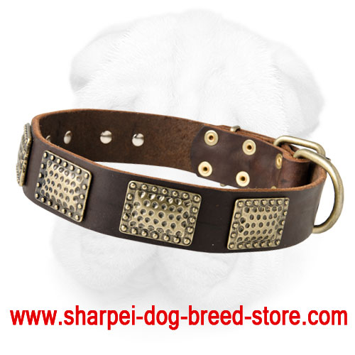 Leather Shar-Pei Collar Decorated with Vintage Brass Plates
