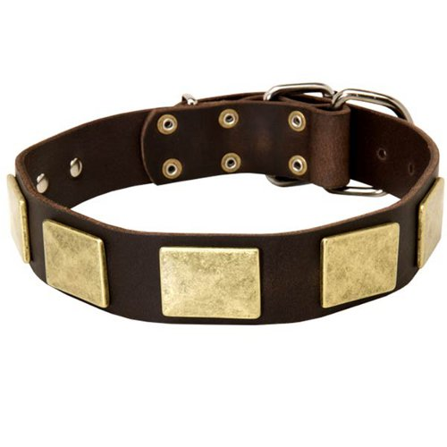 Stylish Shar Pei Collar with Brass Plates