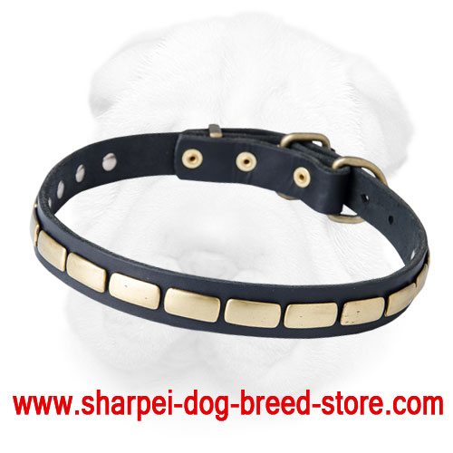 Leather Shar Pei Collar with Brass Plates