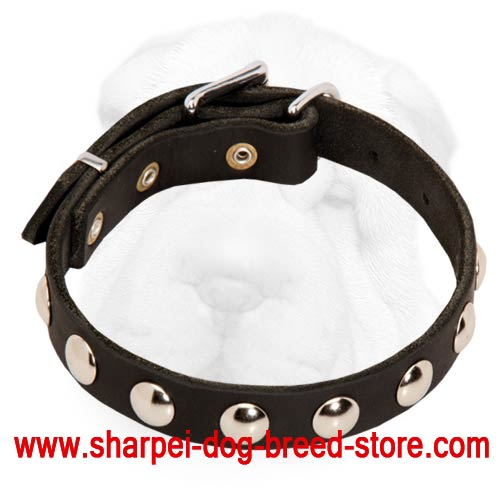 Decorated Shar-Pei Collar with Nickel Half-Ball Studs
