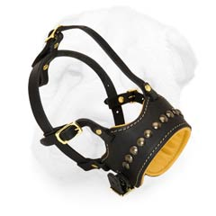 Open-Ended Leather Muzzle for Shar Pei with Nappa Padding and a Row of Brass Studs