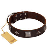 """Cold Star"" Designer FDT Artisan Brown Leather Sharpei Collar with Silver-Like Adornments"