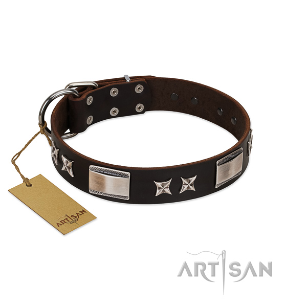 Studded dog collar of full grain leather