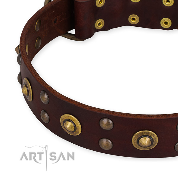 Full grain natural leather collar with reliable fittings for your lovely doggie