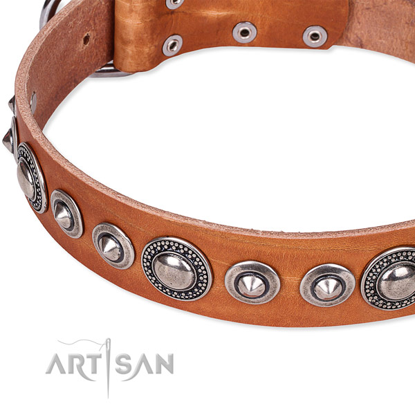 Fancy walking decorated dog collar of reliable full grain genuine leather