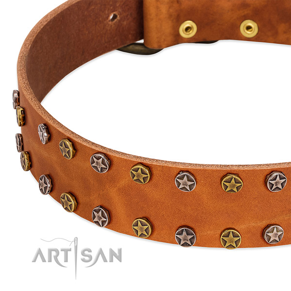 Everyday walking full grain natural leather dog collar with exquisite adornments