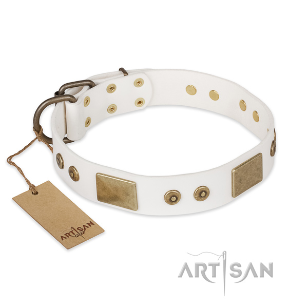Incredible natural leather dog collar for stylish walking