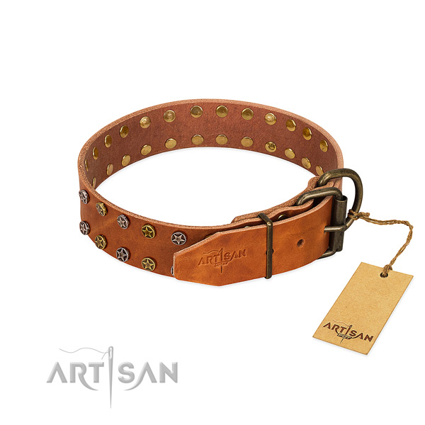 Everyday walking full grain leather dog collar with extraordinary adornments