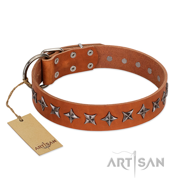 Everyday walking dog collar of top notch full grain genuine leather with decorations