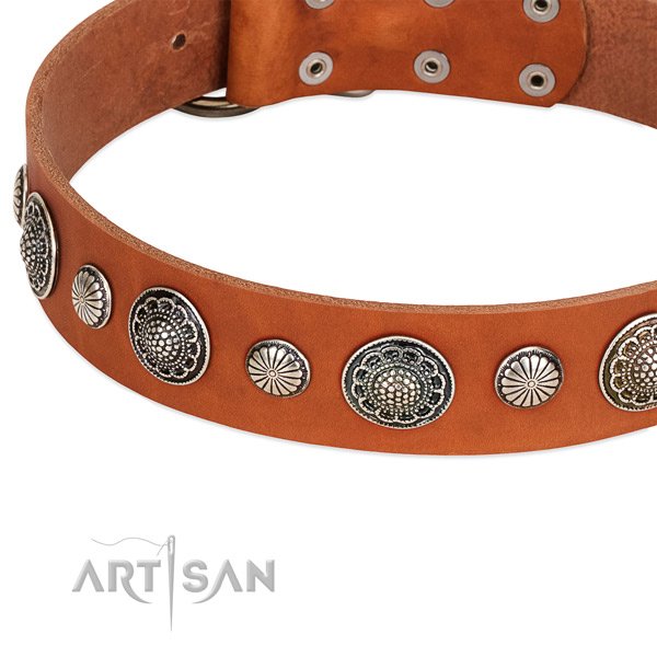 Natural leather collar with reliable buckle for your impressive four-legged friend