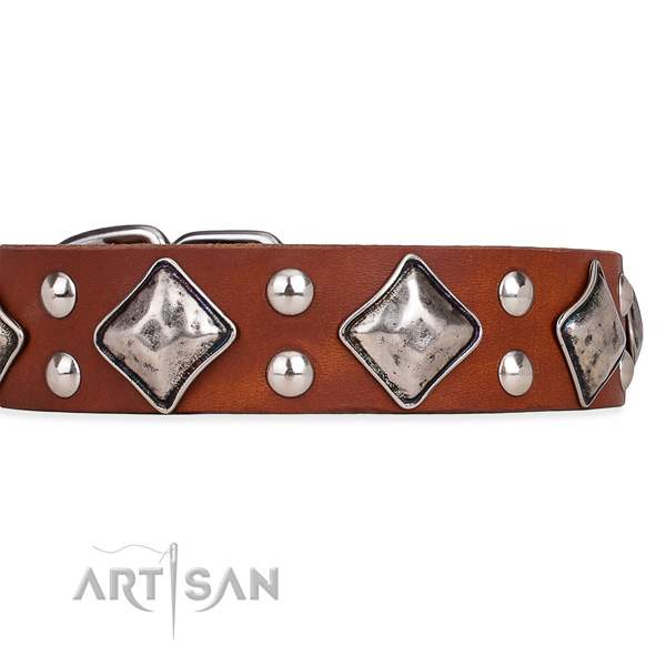 Natural leather dog collar with unusual durable embellishments