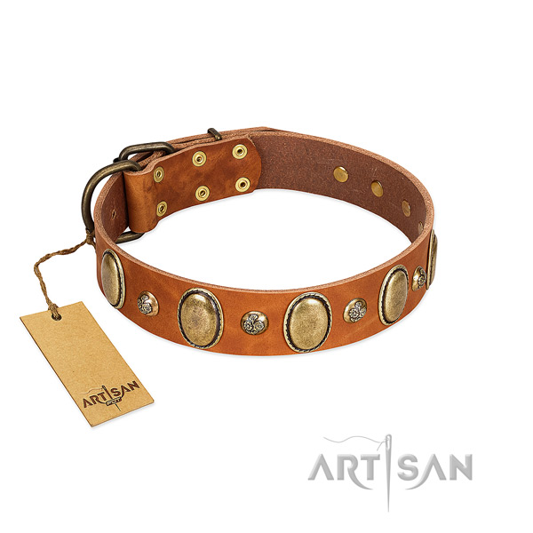 Leather dog collar of reliable material with stylish embellishments