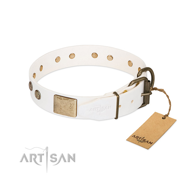 Durable traditional buckle on daily use dog collar