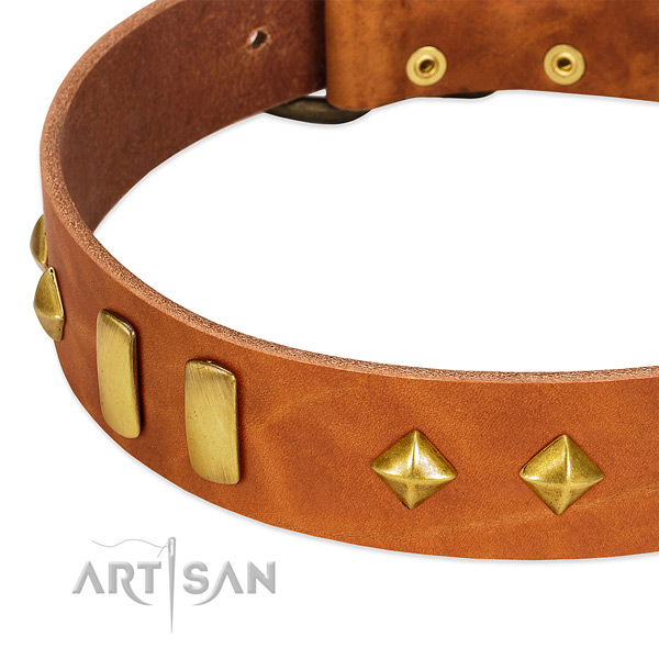 Daily use full grain genuine leather dog collar with stylish studs