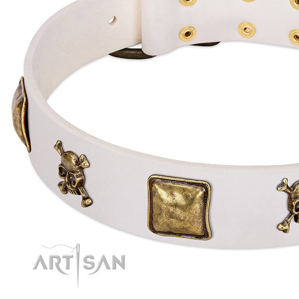 Impressive genuine leather dog collar with durable embellishments