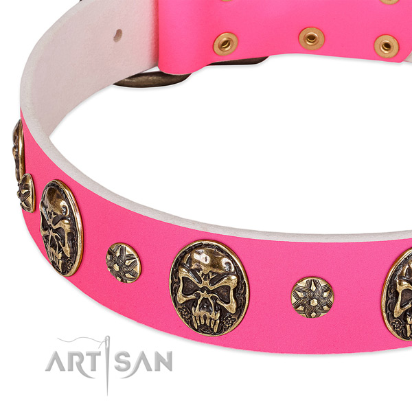 Fashionable dog collar made for your beautiful doggie