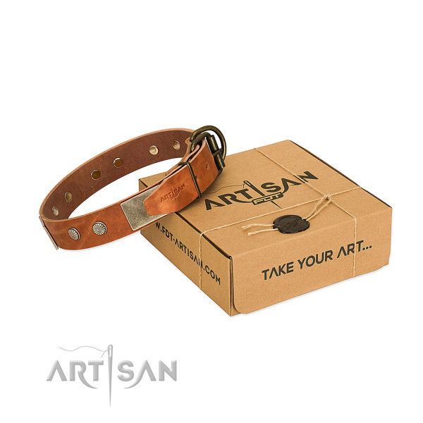 Rust resistant D-ring on dog collar for basic training