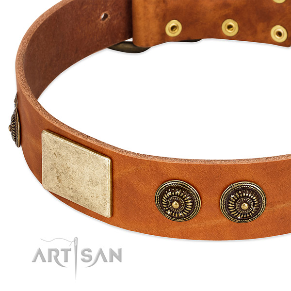 Fashionable dog collar crafted for your lovely pet