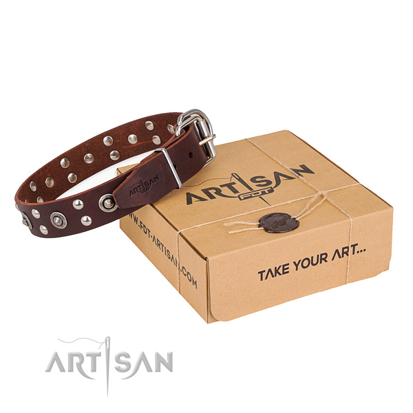 Everyday use dog collar with Unique rust resistant adornments