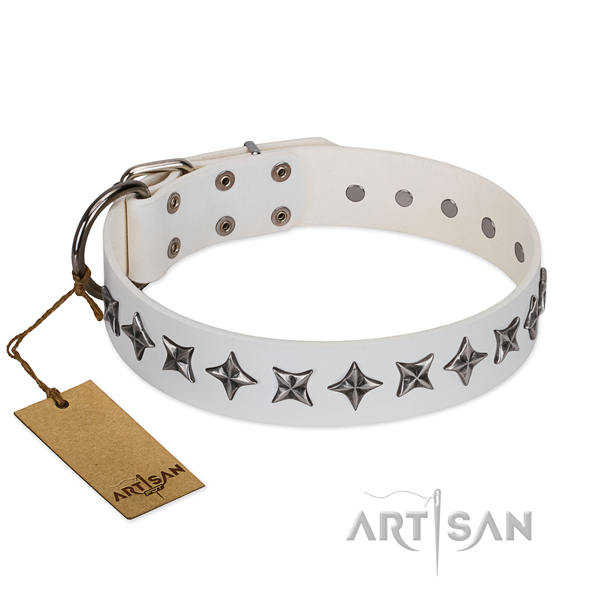 Everyday use dog collar of quality leather with adornments