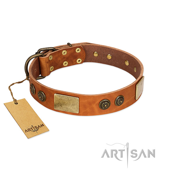 Amazing full grain genuine leather dog collar for daily use