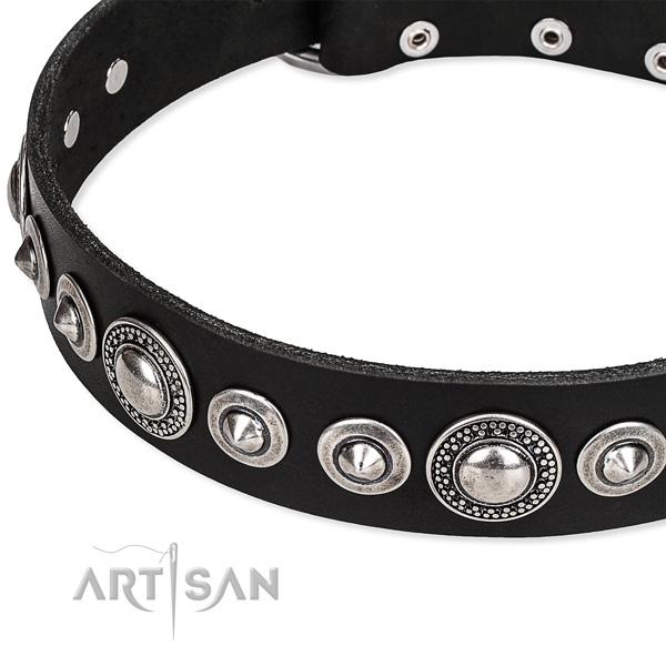Everyday walking studded dog collar of durable full grain natural leather