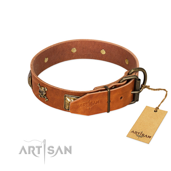 Trendy leather dog collar with strong adornments