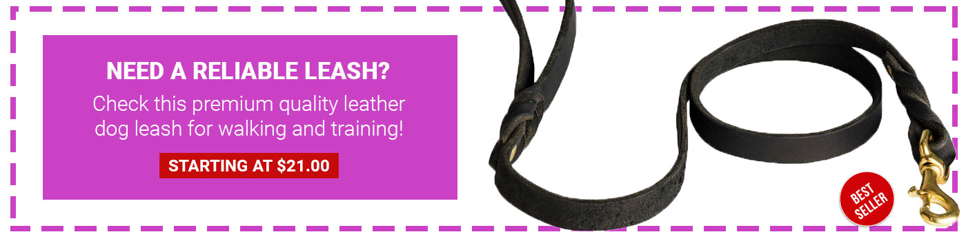 Braided Leather Leash for Shar Pei
